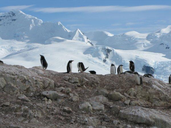 pingouins1.jpg
