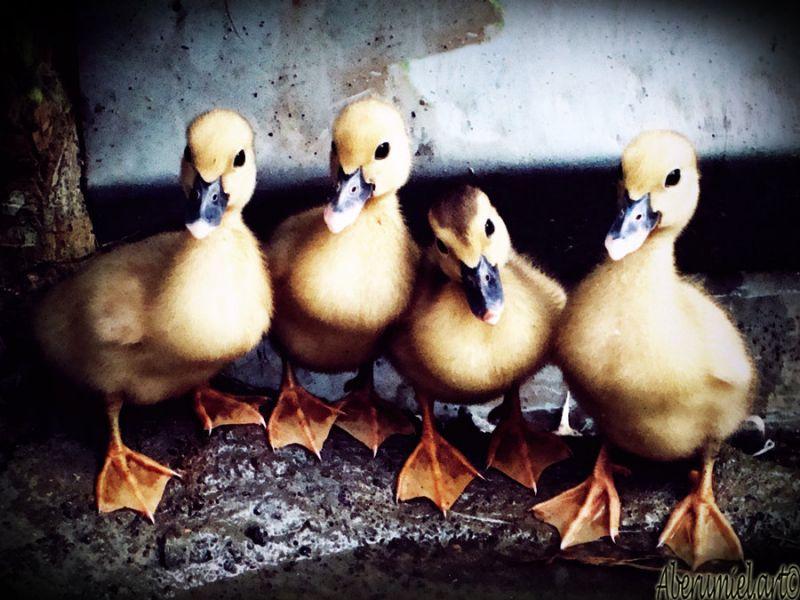 duckysbypandawicked1.jpg