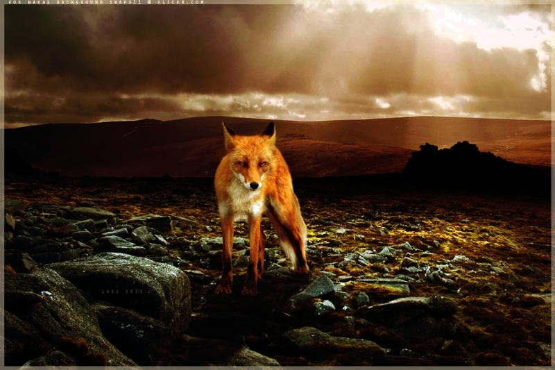 foxbysubaru09.png