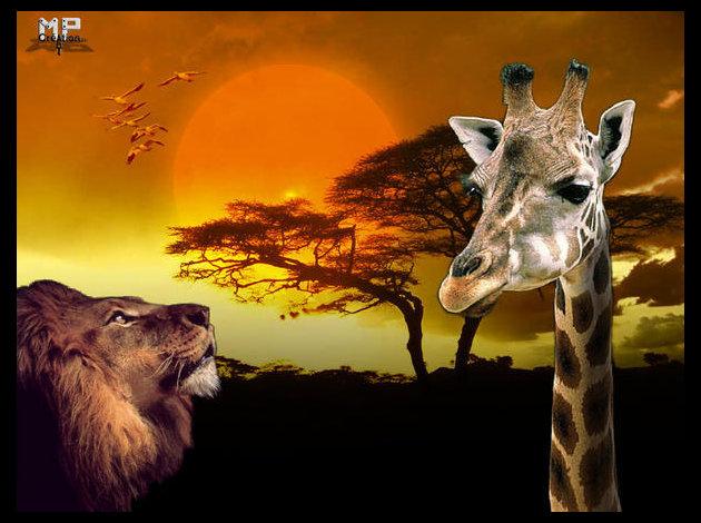 savaneafricaine.jpg