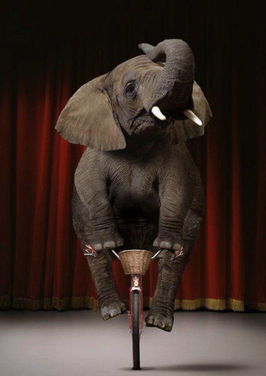 elephantdecirque.jpg