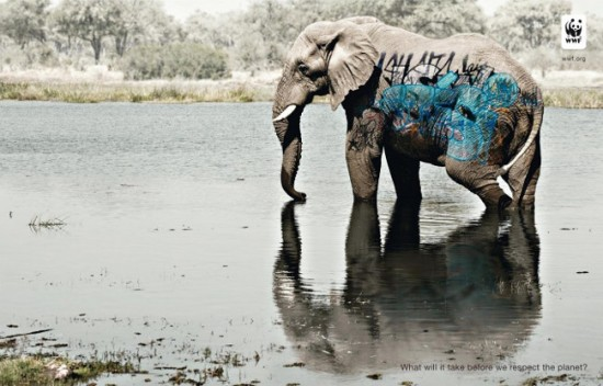 wwfgraffitielephant550x352.jpg