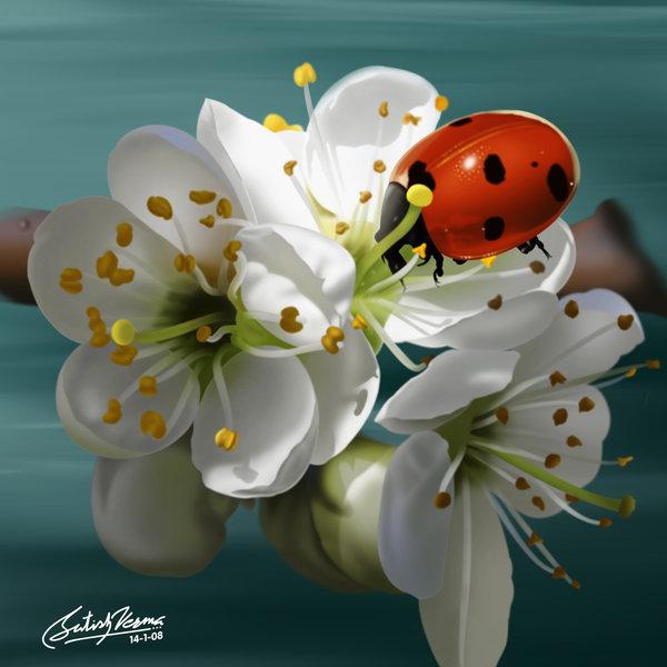 ladybirdbysatishverma.jpg