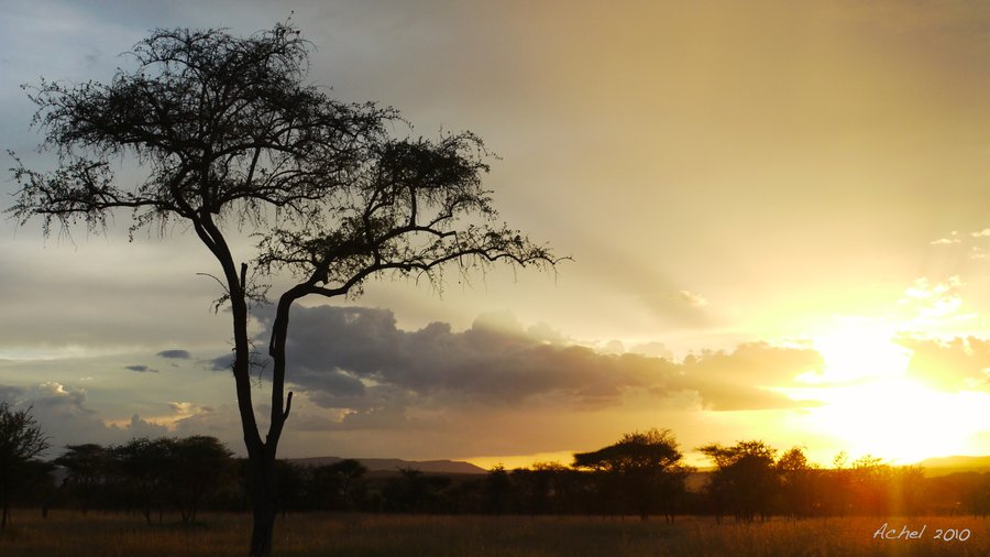 outofafricabyachel.jpg