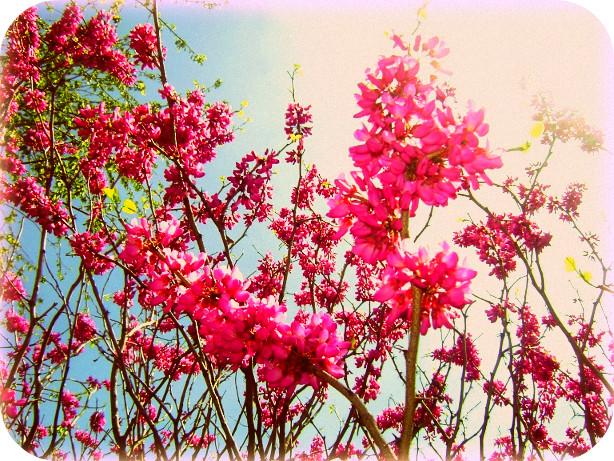 springblossomsbysarafrenzyd2ya8sc.jpg