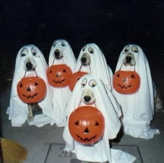 halloweenpourleschiens.jpg