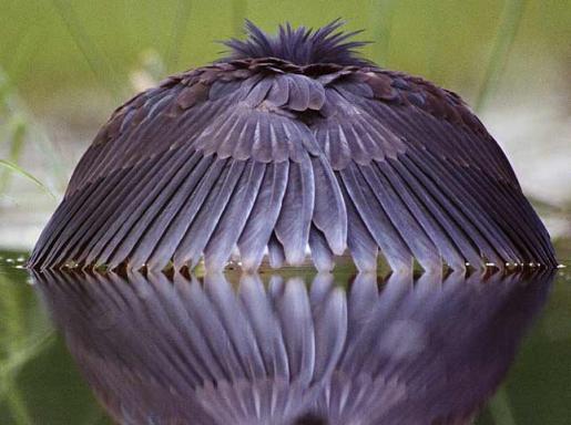 oiseaucache.jpg