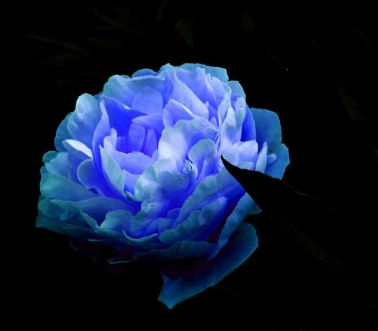 fleurs0890366.jpg