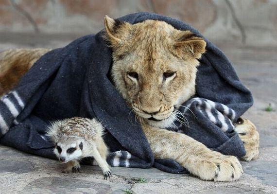 lionkingatruestory06.jpg