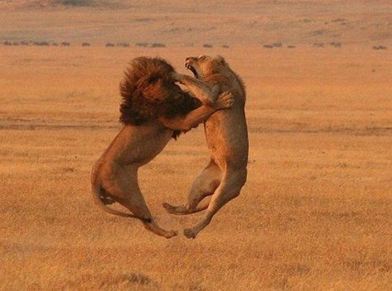 lionkingatruestory08.jpg