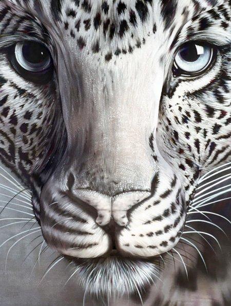 panther6527.jpg